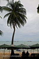 Right click and open in a new tab to view the complete Bangkok/ Pattaya gallery on my website