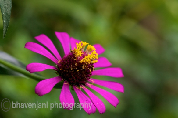 View of a flower in a garden in Rishikesh