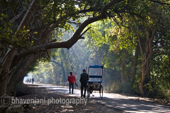 People walk down Hunter's road which is the main lane in Bharatpur bird sanctuary
