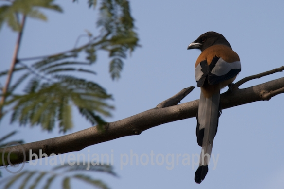 A bird perched atop a branch in Bharatpur bird sanctuary