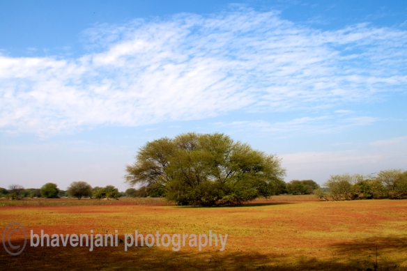 Red and green algae cover the wetlands of Bharatpur bird sanctuary against a blue sky filled with clouds