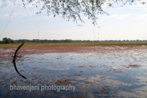 A view of the wetlands of Bharatpur bird sanctuary