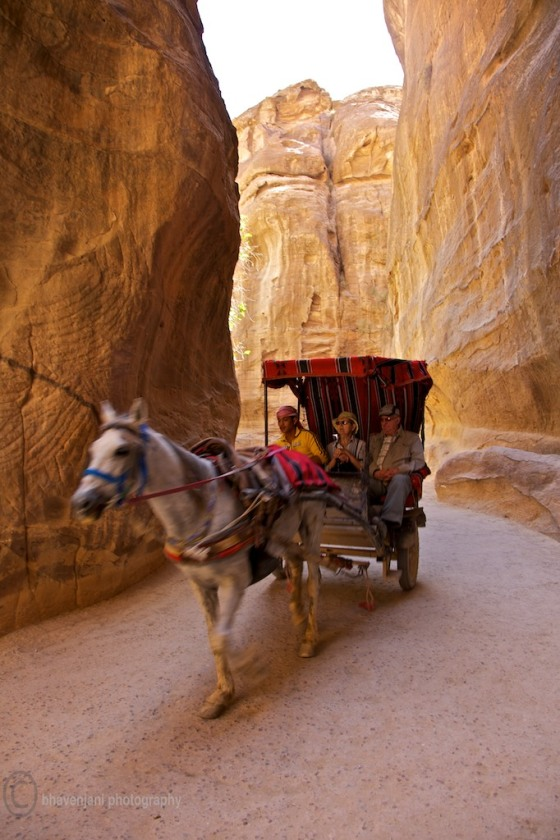 A horse carriage gallops through the Siq bringing in visitors to Petra