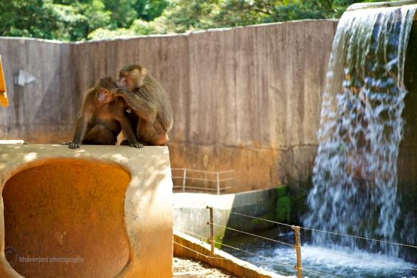 Zoo at Leofoo Village near Taipei, Taiwan