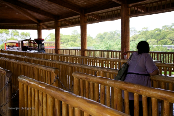 Train ride to view animals at Leofoo Village, Taiwan