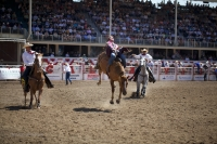 A rider holds onto the horse as it tries to buck him off at the 100th anniversary of Calgary stampede